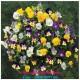 Hoa chậu treo giá sỉ - rẻ